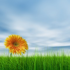 High resolution yellow flower in green grass with blue sky