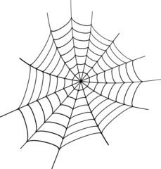 Spinne Netz Spinnennetz
