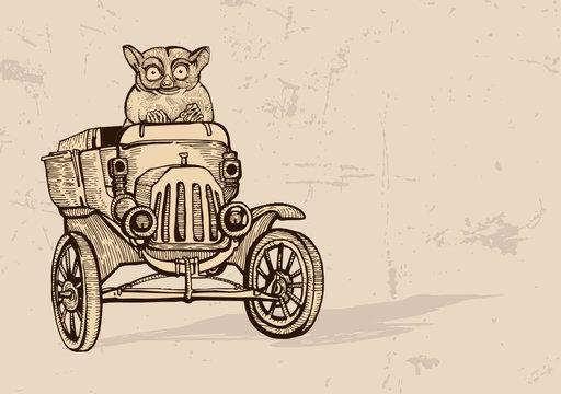 Tarsier driving an old car