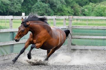 Brown Horse XXXV
