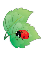 Ladybird with the e-commerce @