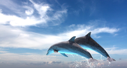 Couple  Of Dolphins Jumping Against The Blue Sky