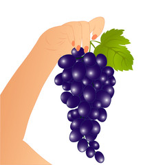 Grape in a hand