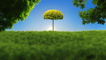 Widoczek zza drzewka