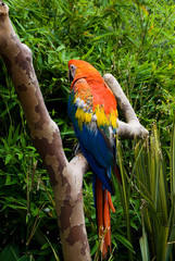 The macaw parrot perched on a branch