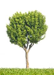 arbre tronc nature feuille herbe vert branche environnement dura