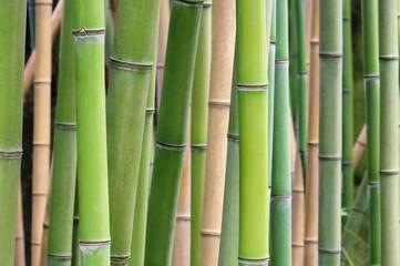 Bambus - bamboo 39