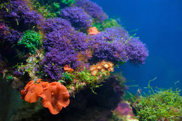 Colorful underwater world