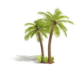 green tropical palm