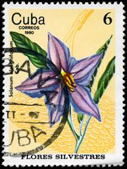 CUBA - CIRCA 1980 Nightshade