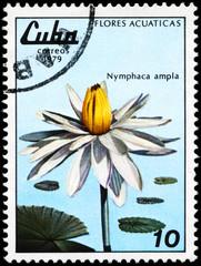 CUBA - CIRCA 1979 White Lotus
