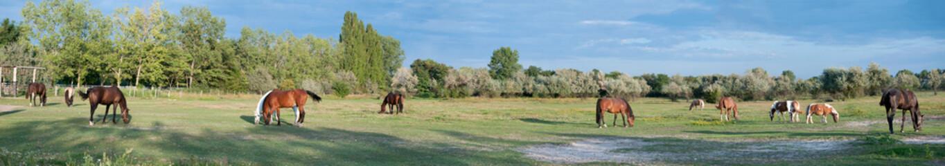 Panorama einer Pferdekoppel