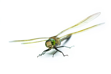 dragonfly on an isolated background