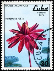 CUBA - CIRCA 1979 Red Nymphaea