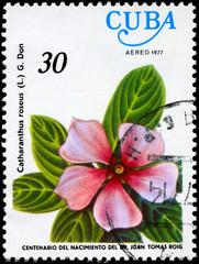 CUBA - CIRCA 1977 Vinca Rosea