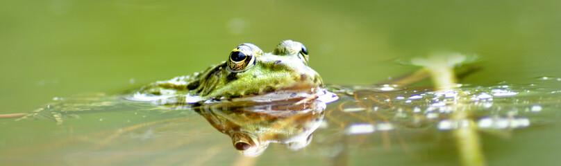 Fototapeten Frosch Frosch