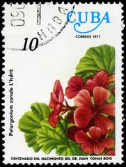 CUBA - CIRCA 1977 Geranium