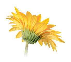 Back-side of yellow flower