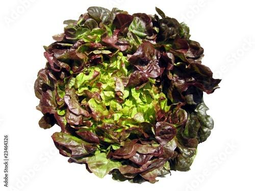 Laitue feuilles de ch ne rouge photo libre de droits sur - Laitue a couper feuille de chene blonde ...