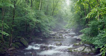 Misty creek in the woods