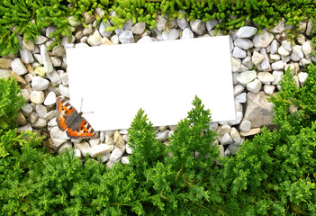 Wall Mural - Nature background