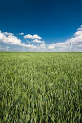 Windpark vor Kornfeld im Sommer
