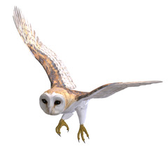 Barn Owl Bird. 3D rendering with clipping path and shadow over w