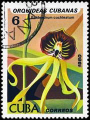 CUBA - CIRCA 1980 Oncidium