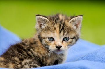 Katzenkind auf Decke