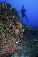 scorcio subacqueo
