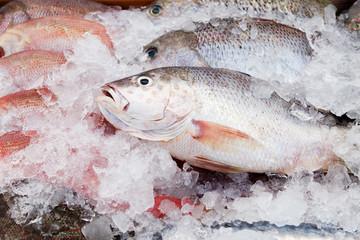 Wall Murals Fish Fresh Frozen Fish