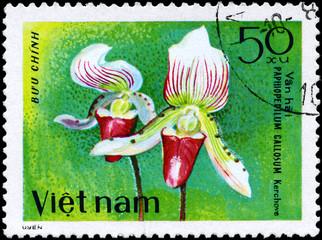 VIETNAM - CIRCA 1979 Paphiopedilum