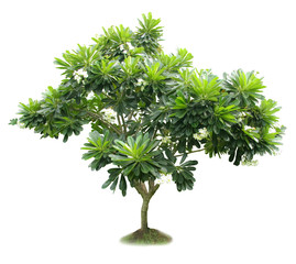 Luntom Tree