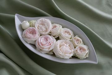 Rosen-rosa-038