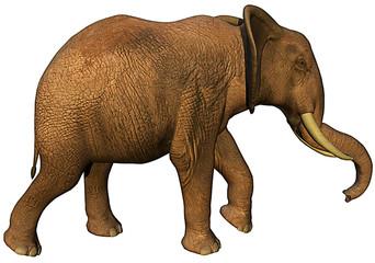 african elephant side