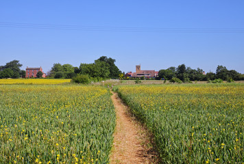 Fototapete - An English Rural Landscape with Village Church