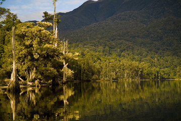Forest reflections on lake edge in New Zealand