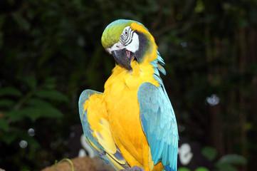 The big parrots.