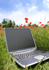 laptop in a corn poppy field
