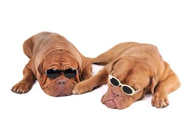 Mafia Dogs