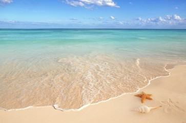 Wall Mural - sea shells starfish tropical sand turquoise caribbean