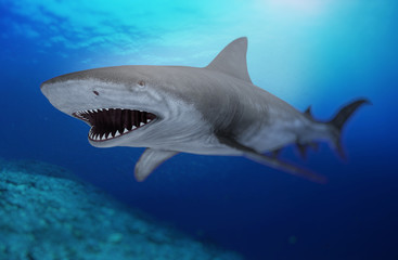 the shark 2