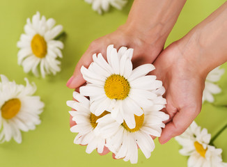 Fotoväggar - Hands with Chamomile flower
