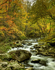 Tremont stream in fall
