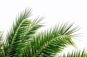 Poster de jardin Palmier Palmenblätter im Wind