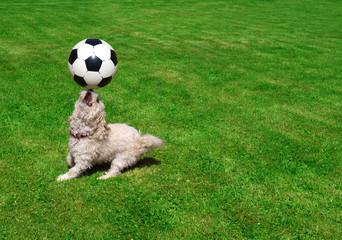 Hund spielt Fußball