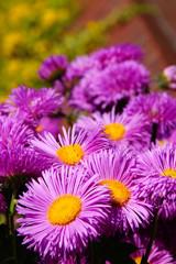 flower #52