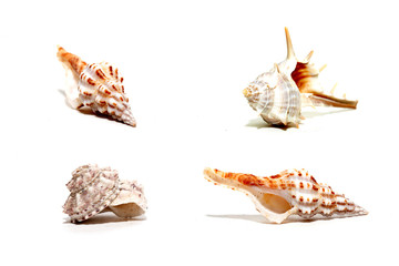 Collection of shells isolated on white