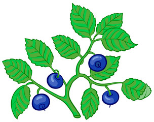Isolated vector illustration of bilberry branch