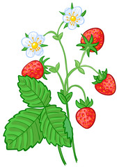 Isolated vector illustration of strawberry branch